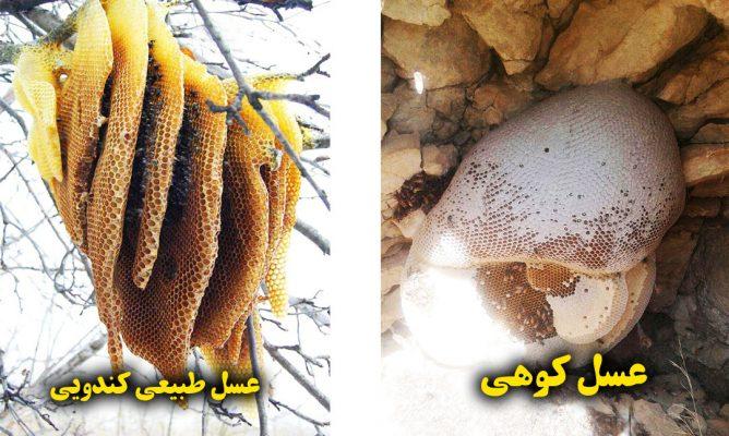 تفاوت عسل کوهی و عسل طبیعی کندویی