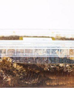 عسل خودبافت طبیعی کارنیکا